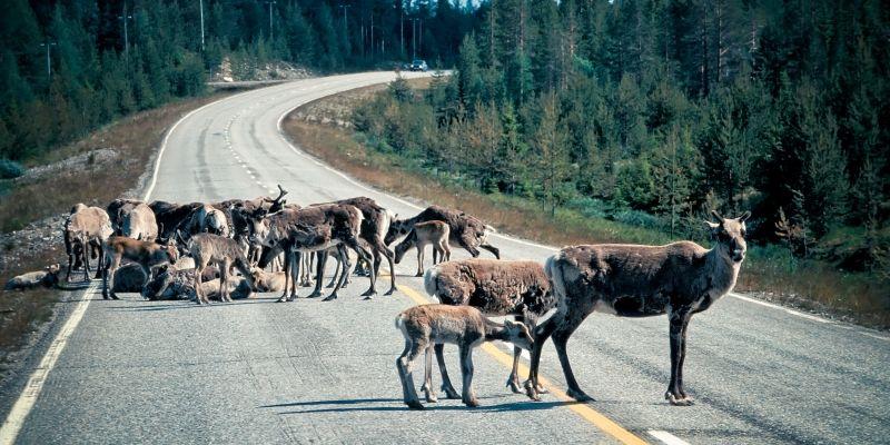 В Финляндию на автомобиле: оплата дорог, Зеленая карта, парковки